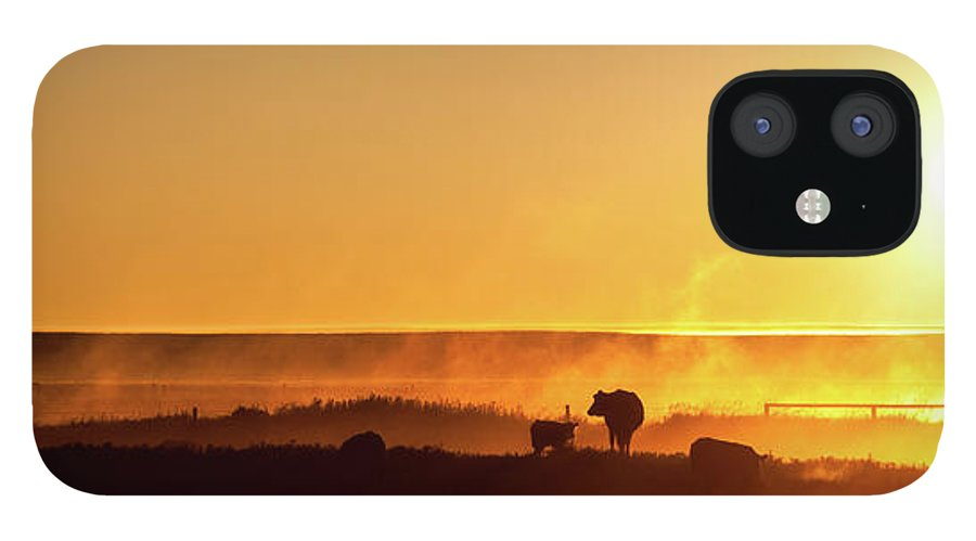 Scenics IPhone 12 Case featuring the photograph Cattle Silhouette Panorama by Imaginegolf