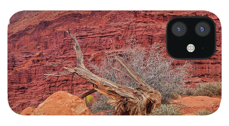 Cedar Tree IPhone 12 Case featuring the photograph Cedar Wood Tree, Fisher Towers, Moab by Fotomonkee