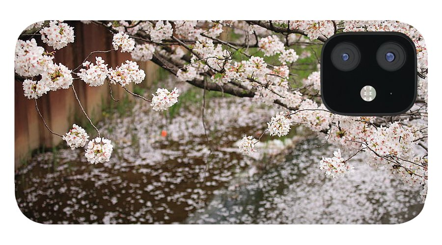 Season IPhone 12 Case featuring the photograph Cherry Blossoms by Photography By Zhangxun