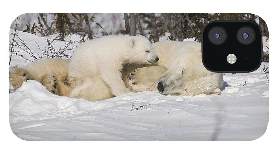 Arctic IPhone 12 Case featuring the photograph Childs love by Richard Berry