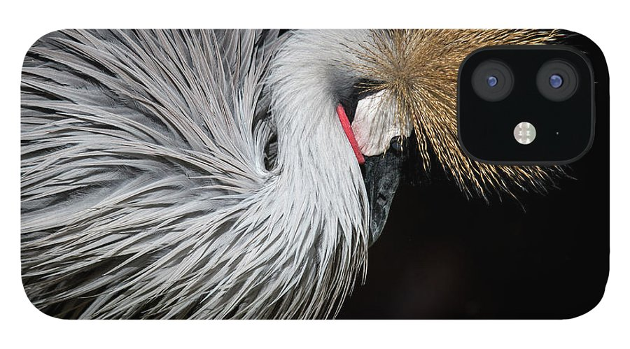 Tranquility IPhone 12 Case featuring the photograph Close Portrait Of A Grey Crowned Crane by © Santiago Urquijo