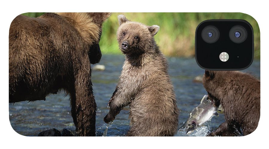 Katmai Peninsula IPhone 12 Case featuring the photograph Coastal Brown Bear Family by Justinreznick