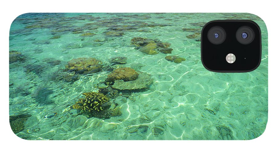 Water's Edge IPhone 12 Case featuring the photograph Coral Paradise by Tammy616