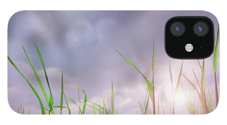 Thunderstorm IPhone 12 Case featuring the photograph Corn Plant With Thunderstorm Clouds by Silvia Otte