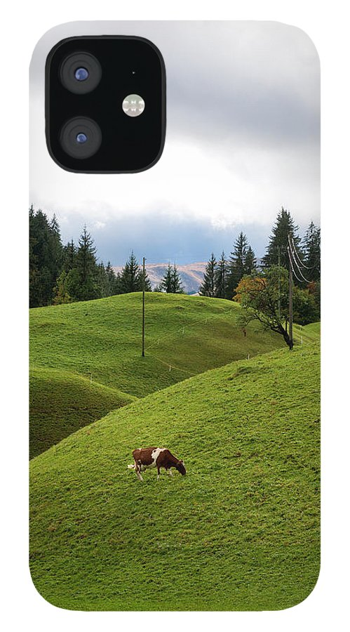 Simmental Cattle IPhone 12 Case featuring the photograph Cow Grazing On Alp by Pidjoe