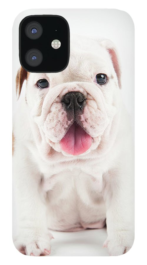 Pets IPhone 12 Case featuring the photograph Cute Bulldog Puppy On White Background by Peter M. Fisher
