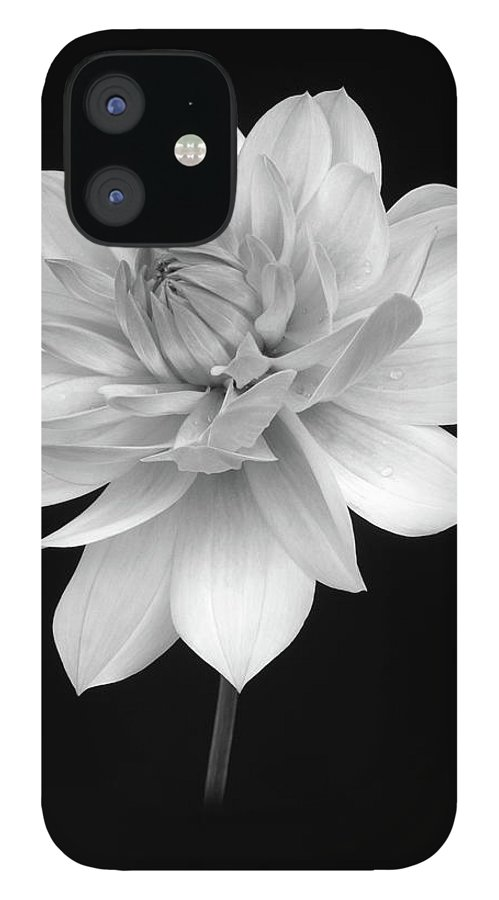 Haslemere IPhone 12 Case featuring the photograph Dahlia In Gentle Shades Of Grey by Rosemary Calvert