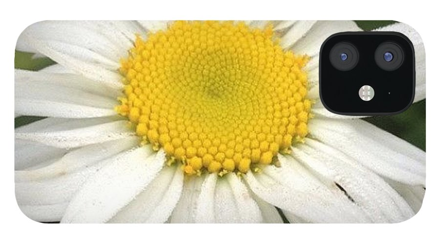 Flower IPhone 12 Case featuring the photograph #daisy #doodle #helovesme #flower by Teresa Mucha