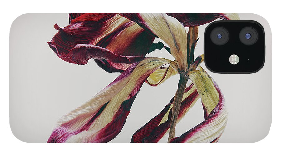 White Background IPhone 12 Case featuring the photograph Dead Flower by Stilllifephotographer