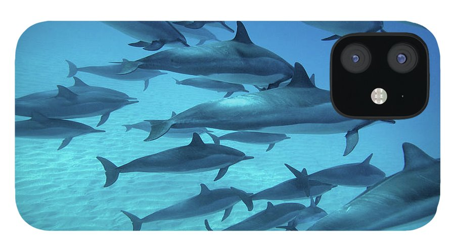 Underwater IPhone 12 Case featuring the photograph Dolphins Spinners by M Swiet Productions
