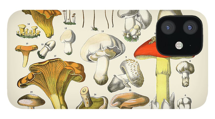 White Background iPhone 12 Case featuring the digital art Edible Mushrooms, Victorian Botanical by Bauhaus1000
