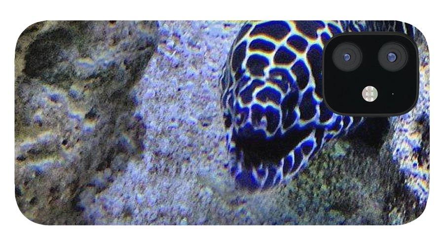 Underwater IPhone 12 Case featuring the photograph #eel #saltwater #underwater #water by Amber Campanaro