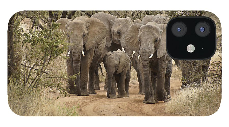 Africa IPhone 12 Case featuring the photograph Elephants Have the Right of Way by Michele Burgess