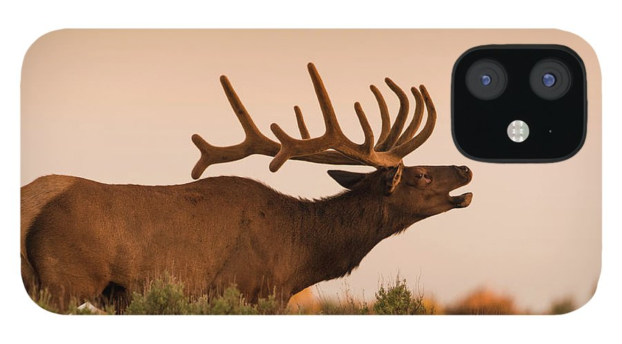 Animal Themes iPhone 12 Case featuring the photograph Elk In Velvet On Hill In Yellowstone by © J. Bingaman Photography