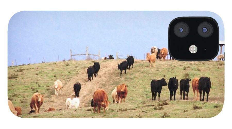 Landscape IPhone 12 Case featuring the photograph Feeding Time by Cumberland Studios