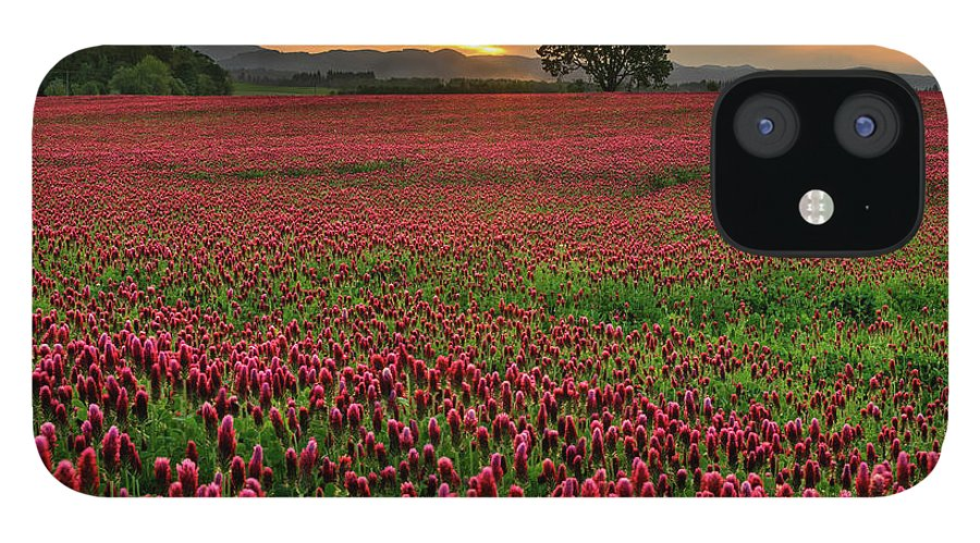 Scenics IPhone 12 Case featuring the photograph Field Of Crimson Clover With Lone Oak by Jason Harris