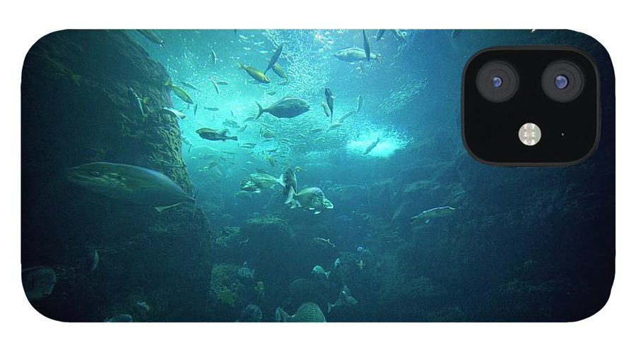 Underwater IPhone 12 Case featuring the photograph Fishes by By Tddch