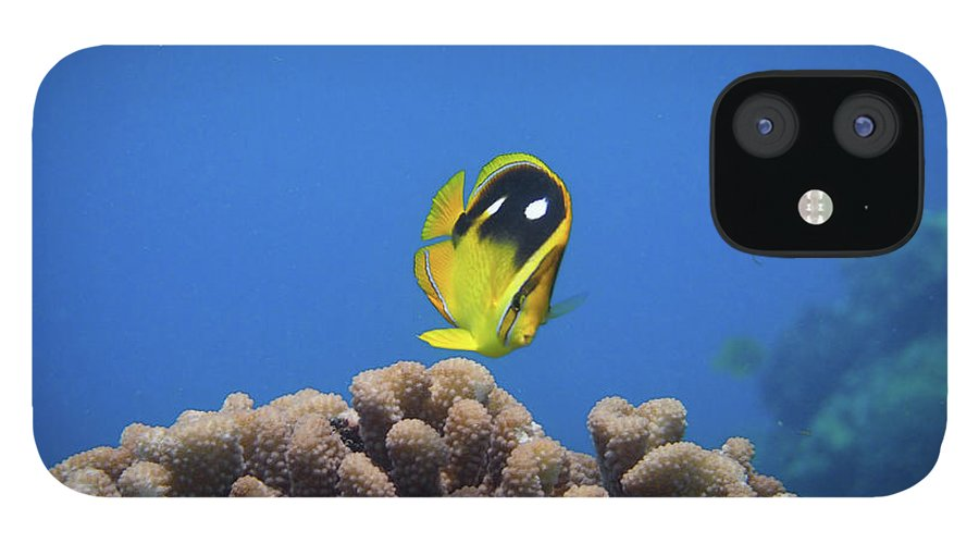 Underwater IPhone 12 Case featuring the photograph Four Spot Butterfly by Taiki Sakai