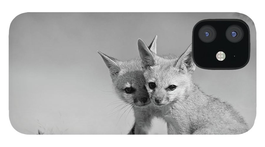 Grass iPhone 12 Case featuring the photograph Fox Tits by Santanu Nandy