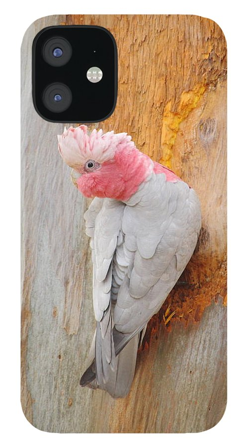 Galah IPhone 12 Case featuring the photograph Galah 2AM-29701 by Andrew McInnes