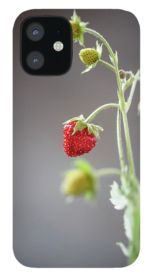Wild Strawberry IPhone 12 Case featuring the photograph Germany, Baden Wuerttemberg, Wild by Westend61