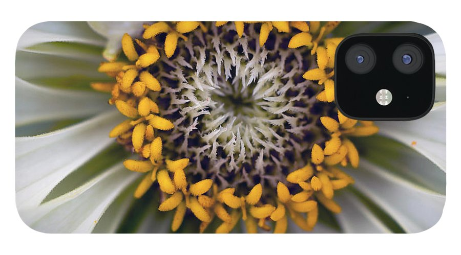 Outdoors IPhone 12 Case featuring the photograph Germany, Zinnia Flower, Close Up by Westend61