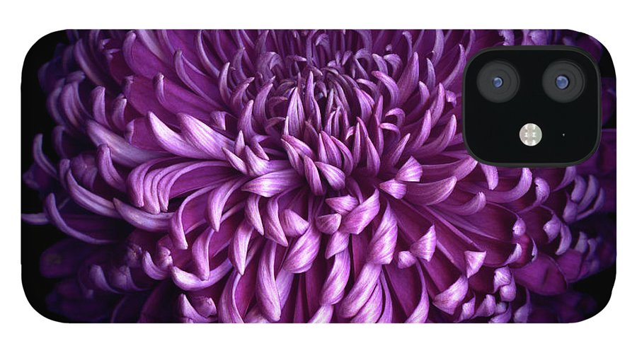 Chrysanthemum IPhone 12 Case featuring the photograph Glorious Autumn Purple Chrysanthemum by Photograph By Magda Indigo