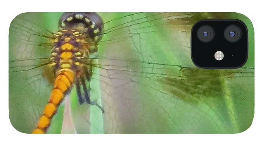 Dragonfly IPhone 12 Case featuring the photograph Gold on green dragonfly by Rrrose Pix