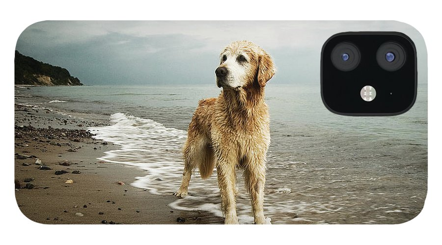 Pets IPhone 12 Case featuring the photograph Golden Retriever On Beach by Jutta Bauer