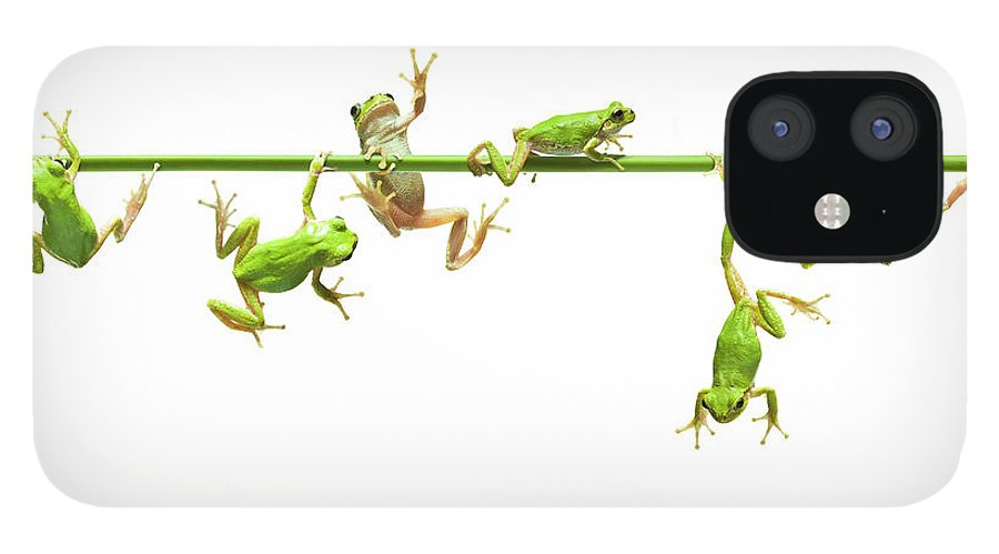 Hanging IPhone 12 Case featuring the photograph Green Flogs Each Other Freely On Stem by Yuji Sakai
