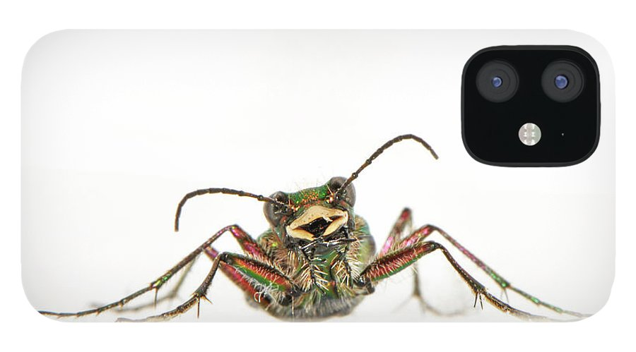 White Background IPhone 12 Case featuring the photograph Green Tiger Beetle by Robert Trevis-smith
