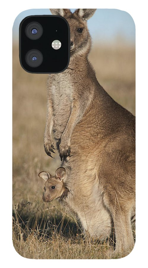 512752 iPhone 12 Case featuring the photograph Grey Kangaroo With Joey Maria Isl by D. Parer & E. Parer-Cook