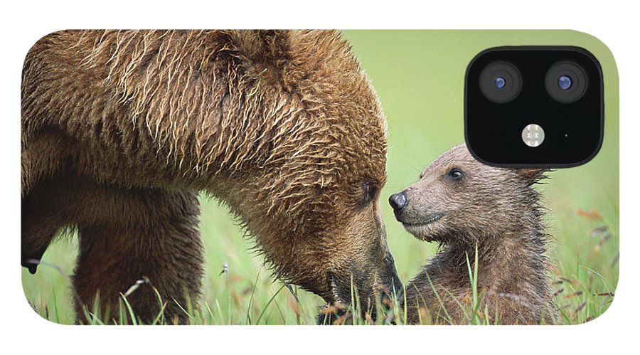 00345260 iPhone 12 Case featuring the photograph Grizzly Bear And Cub in Katmai by Yva Momatiuk John Eastcott