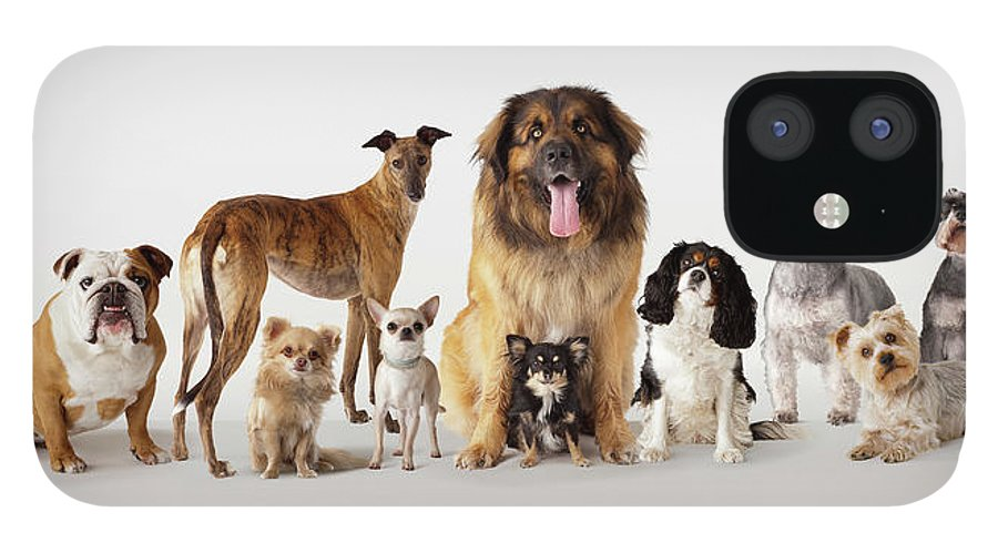 Pets IPhone 12 Case featuring the photograph Group Portrait Of Dogs by Compassionate Eye Foundation/david Leahy