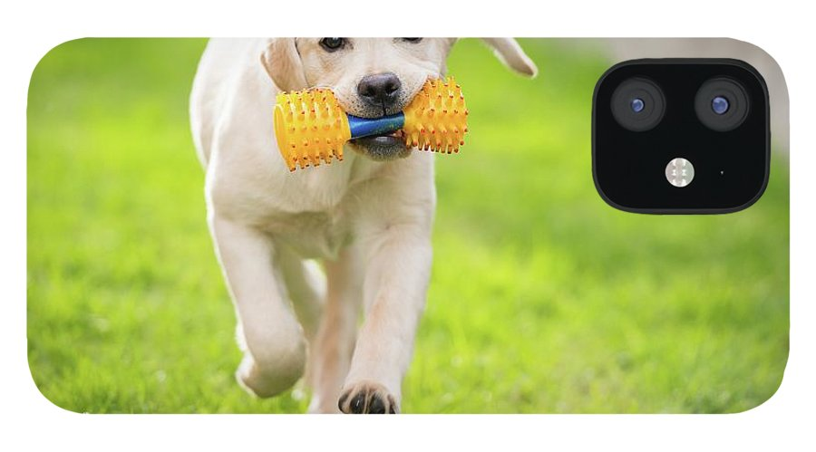 Pets IPhone 12 Case featuring the photograph Happy Hour by Stefan Cioata