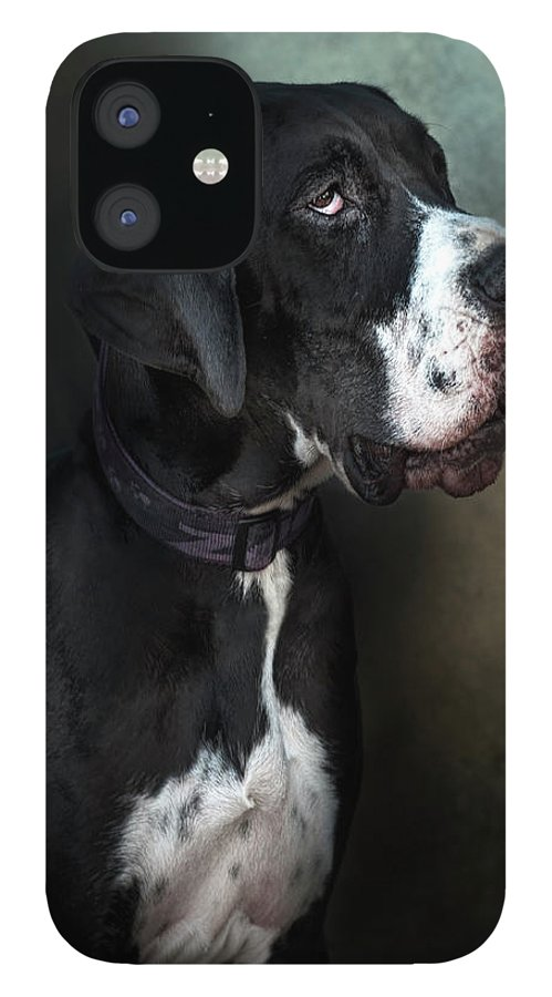 Pets IPhone 12 Case featuring the photograph Helga by Silversaltphoto.j.senosiain