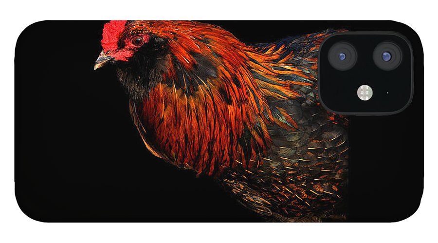 Fine Art IPhone 12 Case featuring the photograph hen by Leon Hollins III