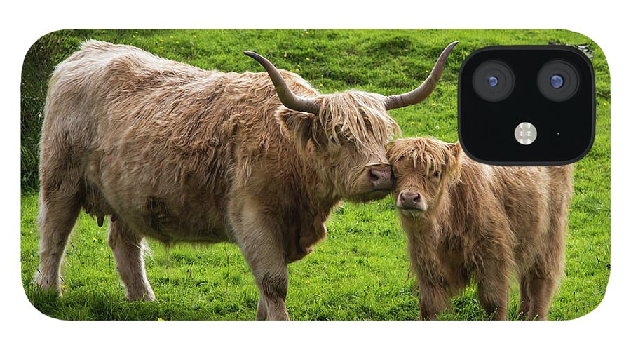 Horned IPhone 12 Case featuring the photograph Highland Cattle And Calf by John Short / Design Pics