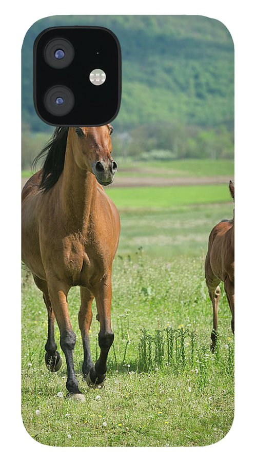 Horse IPhone 12 Case featuring the photograph Horses Running In Summer Pasture, Mare by Catnap72
