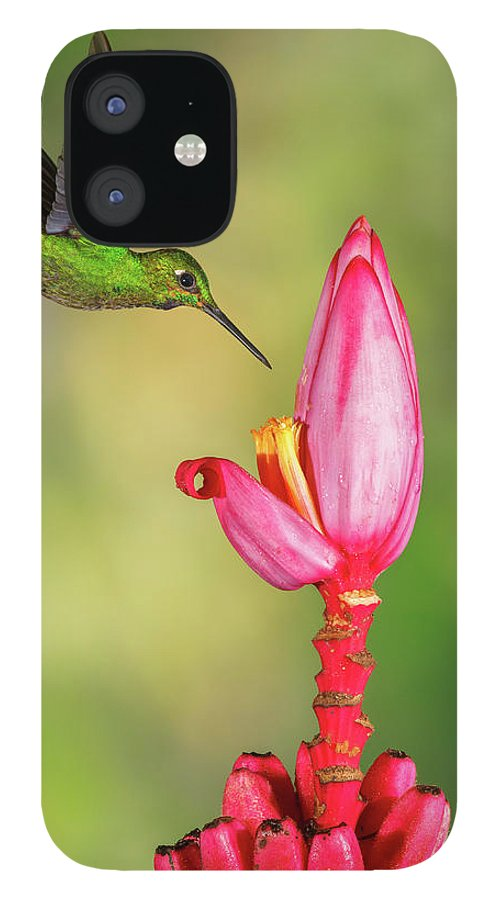 Green-crowned Brilliant iPhone 12 Case featuring the photograph Hummingbird , Green-crowned Brilliant by Kencanning