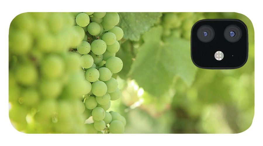 Alcohol iPhone 12 Case featuring the photograph Italian Spumante White Grapes by Tostphoto