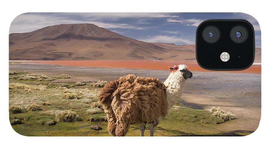 Scenics IPhone 12 Case featuring the photograph Laguna Colorado Lake With Llama by John Elk
