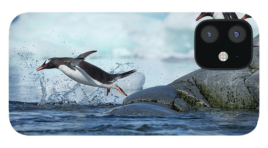 Water's Edge IPhone 12 Case featuring the photograph Leaping Gentoo Penguins, Antarctica by Paul Souders