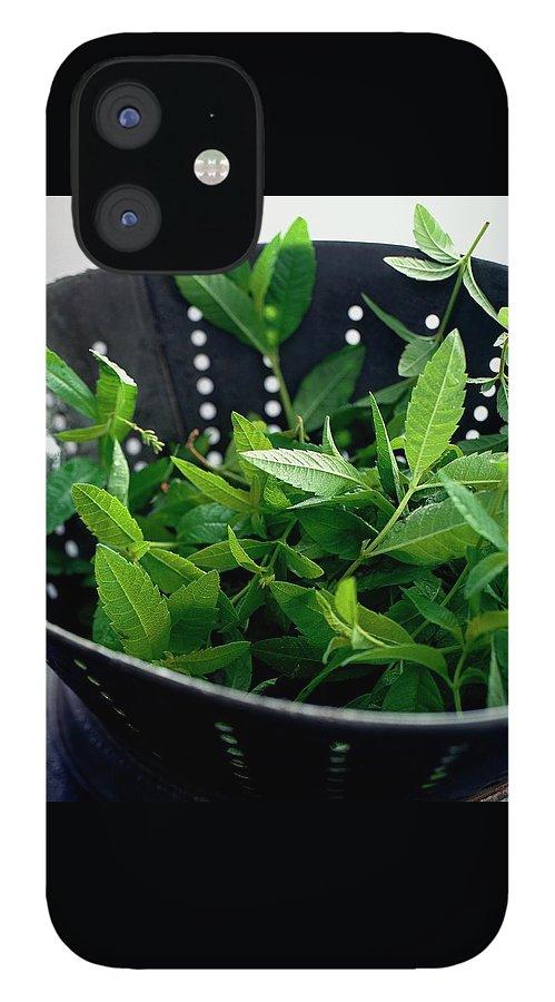 Lemon Verbena Herbs IPhone 12 Case