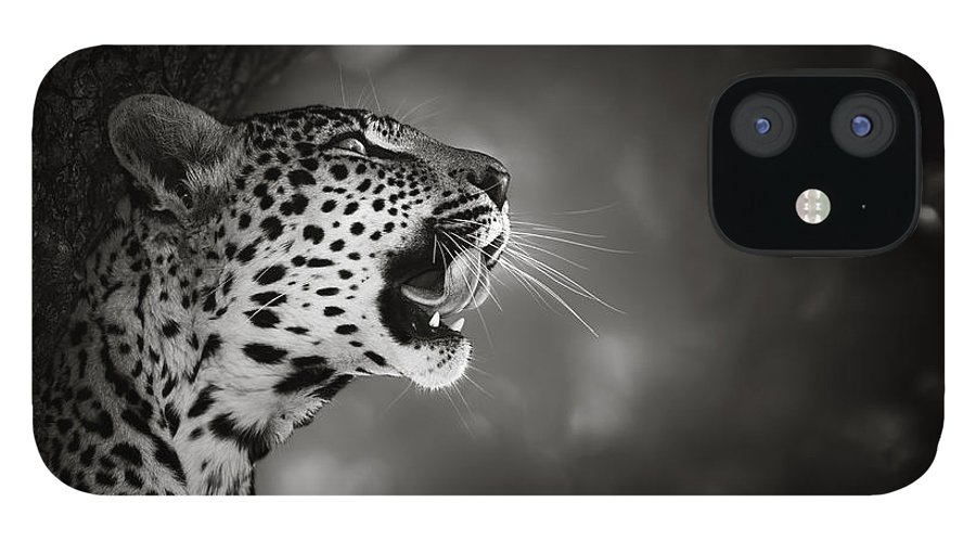 Leopard IPhone 12 Case featuring the photograph Leopard portrait by Johan Swanepoel