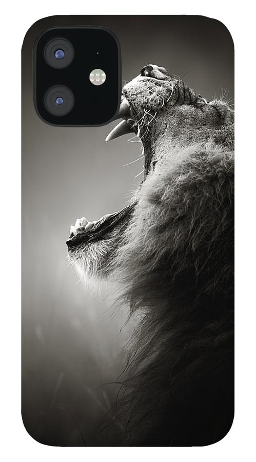 Lion IPhone 12 Case featuring the photograph Lion displaying dangerous teeth by Johan Swanepoel