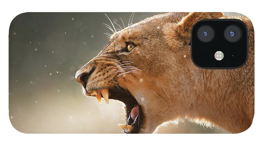 Lion iPhone 12 Case featuring the photograph Lioness displaying dangerous teeth in a rainstorm by Johan Swanepoel