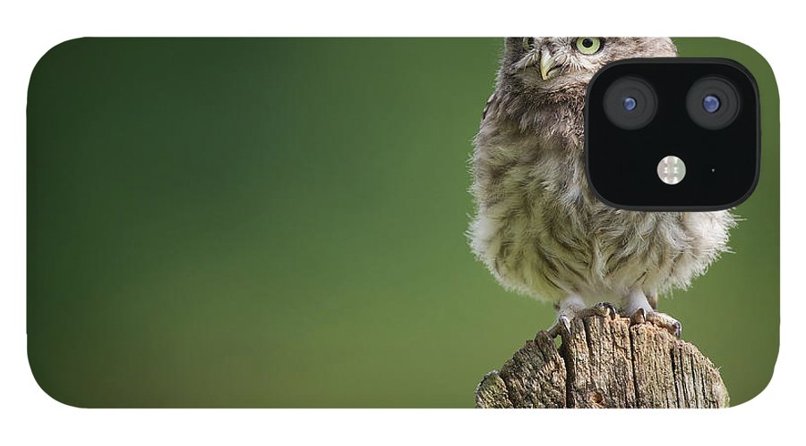Owlet IPhone 12 Case featuring the photograph Little Fuzzy by Markbridger