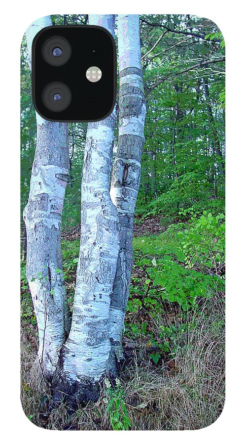 Birch Tree IPhone 12 Case featuring the photograph Lone Birch in the Maine Woods by Suzanne Gaff
