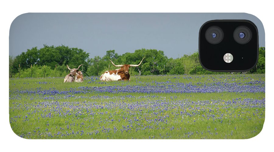 Horned IPhone 12 Case featuring the photograph Longhorns And Bluebonnets by Linda Trine